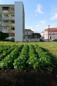 Urbane Farm in Dessau